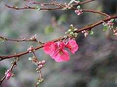Наближаващата пролет