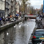 Swans, Amsterdam