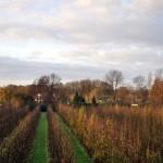 Pear tree garden