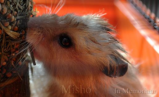 Misho - My Friend